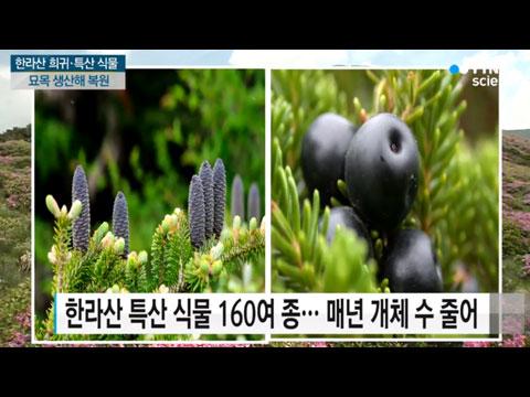[사이언스TV] 한라산 희귀·특산식물 묘목 본격 생산 자생지에 복원