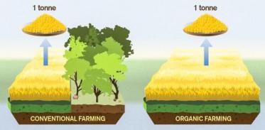 [사이언스타임즈] 유기농 식품이 기후변화에 악영향