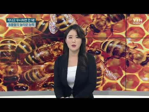 [사이언스TV] 작다고 무시하면 안 돼, 벌·물고기·모기의 놀라운 능력