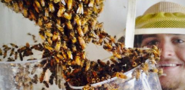 [사이언스타임즈] 꿀벌들의 놀라운 벌집 환기 전략