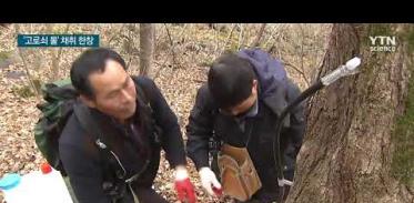 [사이언스TV] 나무가 주는 천연 약수 '고로쇠 물' 채취 한창