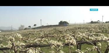 [사이언스TV] 꽃샘추위에 농작물 관리 유의해야