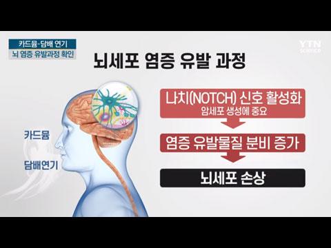 [사이언스TV] 카드뮴·담배연기가 뇌 손상 '젊은 뇌졸중' 흡연이 주원인