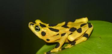 [사이언스타임즈] 개구리 멸종의 원인은 '교역'