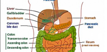 [사이언스타임즈] 장 면역반응 부분별로 다르다