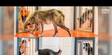[사이언스TV] 애완견 사회성 늑대에서 기인