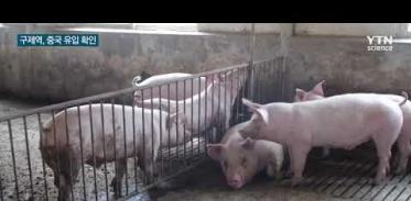 [사이언스TV] 구제역 바이러스 중국 유입 확인, 아프리카돼지열병도 비상