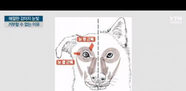 [사이언스TV] 애절한 강아지 눈빛, 거부할 수 없는 이유