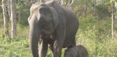 [사이언스타임즈] 코끼리는 코로 수학을 한다