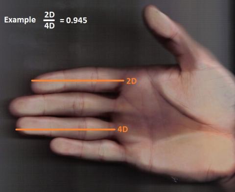 [사이언스타임즈] 손가락으로 성격을 파악할 수 있나?