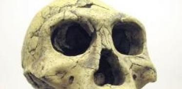[사이언스타임즈] 초기 인류화석의 연령 측정법은?