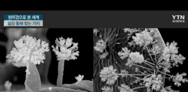 [사이언스TV] 보이는 게 다가 아니다, 현미경으로 바라본 새로운 세계