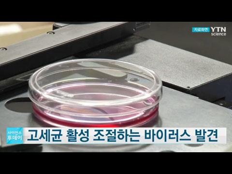 [사이언스TV] 고세균 활성 조절하는 바이러스 발견, 기후 변화에 도움