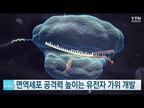 [사이언스TV] 면역세포의 암 공격력 높이는 유전자 가위 기술 개발