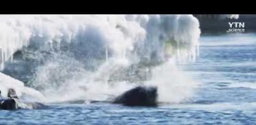 [사이언스TV] 남극 웨델물범, 아델리펭귄 사냥 모습 최초로 포착