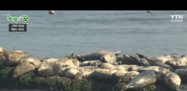 [사이언스TV] 서해의 생태섬, 백령도·유부도