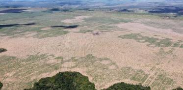 [사이언스타임즈] 아마존 벌채 2017년 이후 '급증