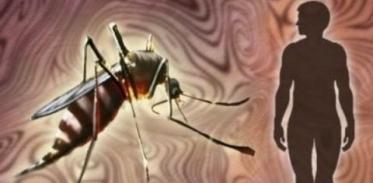 [사이언스타임즈] 모기만 골라 죽이는 살충제가 있다?