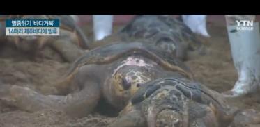 [사이언스TV] 멸종위기 '바다거북' 14마리 제주바다에 방류