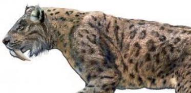 [사이언스타임즈] 검치호랑이가 멸종한 이유는?