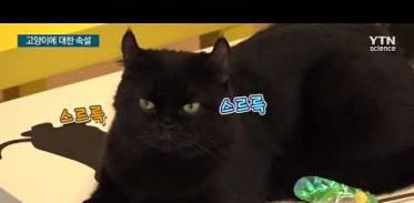고양이에 대한 루머