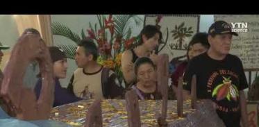 '코카인 재배 막자' 페루에서 열린 카카오 축제