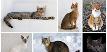 [사이언스타임즈] 고양이는 냉담한 동물이 아니다