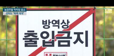 ASF 한 달 농장주들 막막함 호소, 강화도 축제 재개