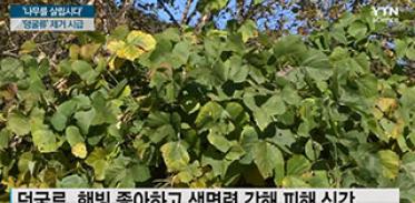 '나무를 살립시다' 생태계 파괴 '덩굴류' 제거 시급