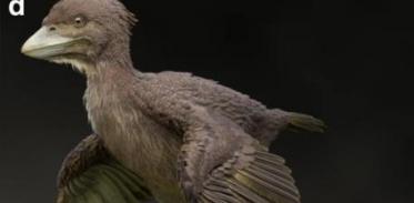 [사이언스타임즈] 1억 2000만 년 전 '닭' 모양 화석 발견
