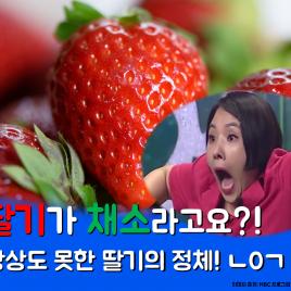 딸기가 채소라고요?  상상도 못한 딸기의 정체! ㄴ0ㄱ