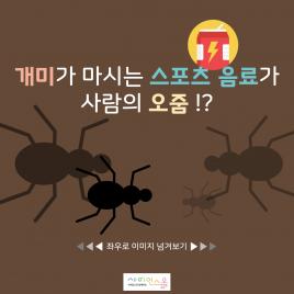 개미가 마시는 스포츠음료가 사람의 오줌!?