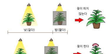 [사이언즈타임즈] 봄이 오면 어김없이 봄꽃이 피는 이유