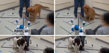 [사이언즈타임즈] 개는 로봇의 명령을 따를까?