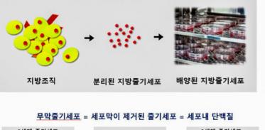 [사이언즈타임즈] '3세대 줄기세포'로 부작용 없이 대머리 치료?