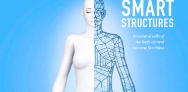 [사이언즈타임즈] 인체 구조 세포도 면역 기능 조절한다