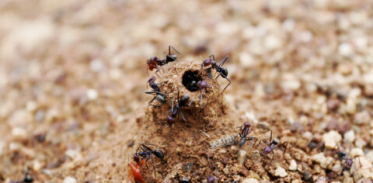 [사이언즈타임즈] 개미가 지구 생태계를 살린다