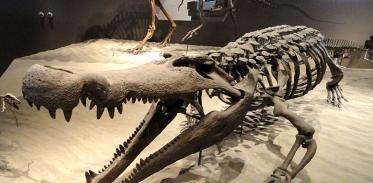 [사이언즈타임즈] 공룡 잡아먹은 거대 악어 있었다