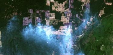 [사이언즈타임즈] 더 빨리 사라지는 아마존 원시림