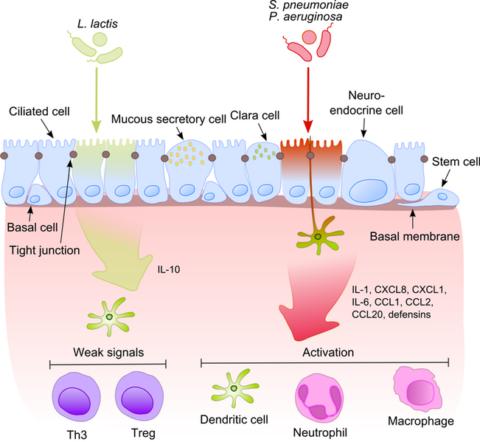 [사이언즈타임즈] 장내 미생물군, 면역항암치료 효과 높인다