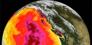 [사이언즈타임즈] '해양 열파'로 바다 생태계 소멸
