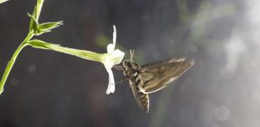 [사이언즈타임즈] 대기오염이 곤충 후각도 마비시킨다