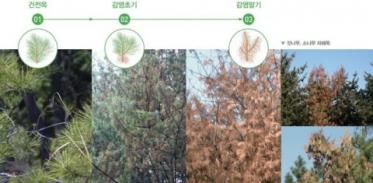 [사이언즈타임즈] 소나무 에이즈라 불리는 병의 실체