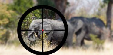 [사이언즈타임즈] 전쟁은 야생동물에게도 영향 미친다?