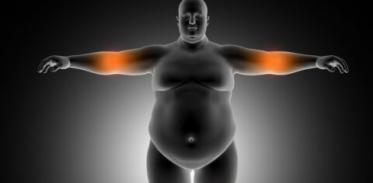 [사이언즈타임즈] 가을은 다이어트의 계절이다?