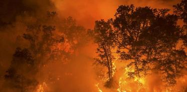 [사이언즈타임즈] 산불의 역설…산불이 건강한 숲을 만든다?